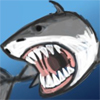 Play New York Shark